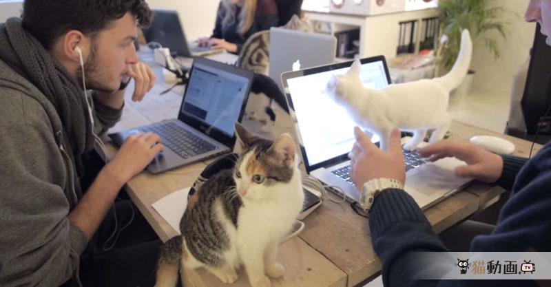 人間より猫の数が多い会社の紹介動画が羨ましすぎて悶絶!
