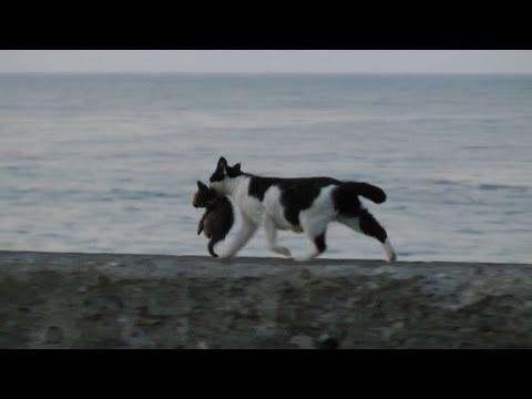【全猫が泣いた】見終わるとなんだか大作映画をみた気持ちになります✨