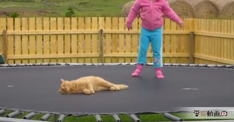 トランポリンで遊ぶ女の子とブルンブリン揺れる猫ちゃん