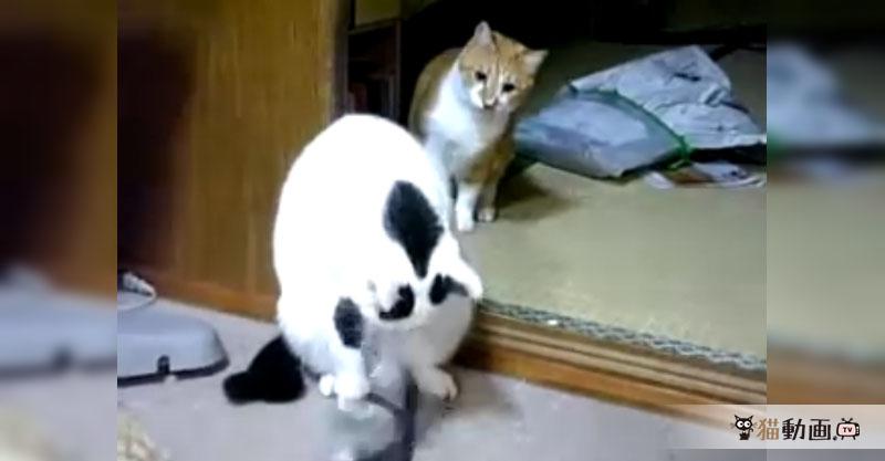 猫ちゃーん! 後ろ! 後ろ! 後ろだってばぁー!!!(>w< )