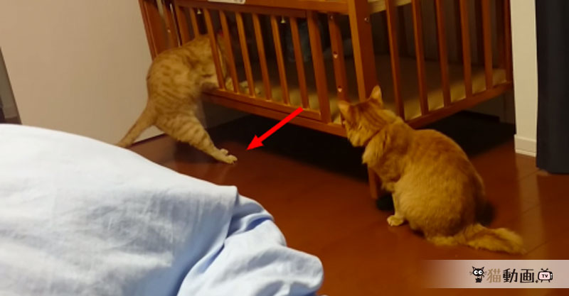 ベビーベットに入り込もうとした猫ちゃんに悲劇が起きたのでした💦