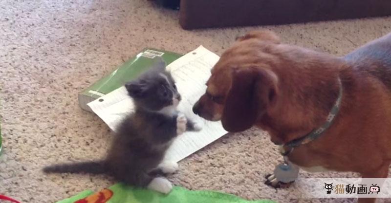 すぅーーーごっく優しい猫パンチo(。´>ω<`。)o 癒されすぎます✨