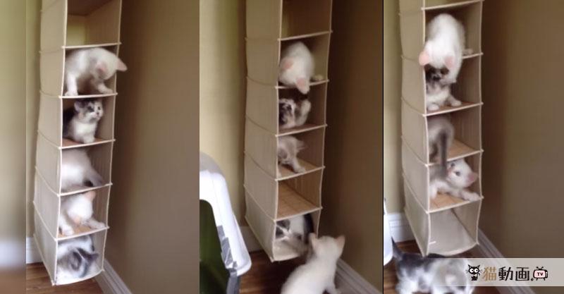 吊り収納を使ってみると……猫タワーマンションになりました( ´艸`)
