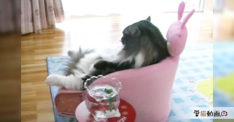 この貫禄、マフィアのボスですわ(゚д゚;)  真剣な表情でテレビを見る猫