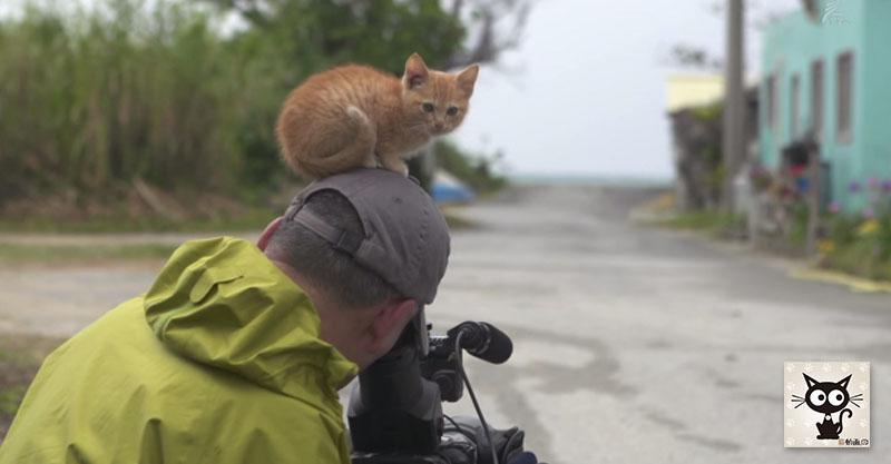 子猫が頭の上に乗っても撮影を続けるプロカメラマンのプロ根性!