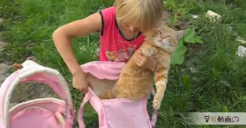 眠い? 抵抗するのをやめた? 女の子のされるがままの無抵抗猫。