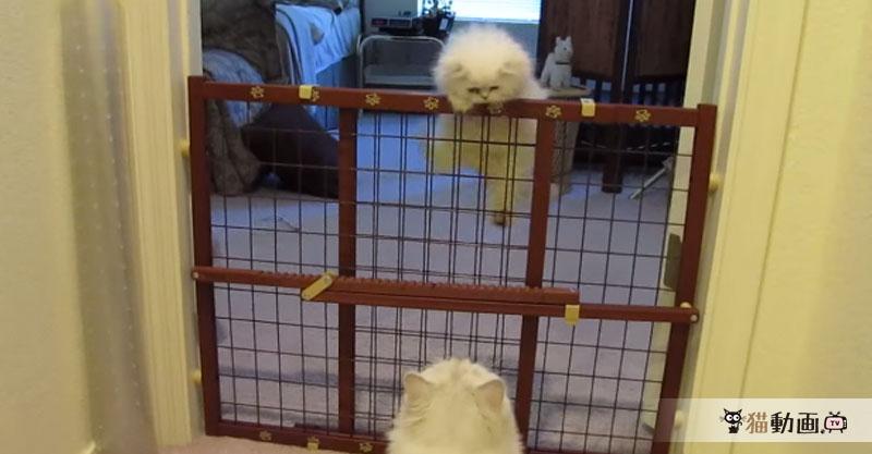 大人の階段を登った子猫ちゃんに感激するお母さん猫、子離れはまだ先ですね(*´ェ`*)