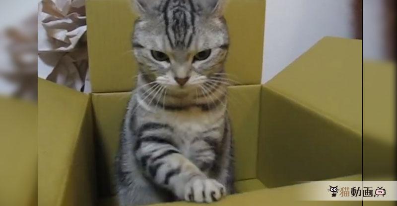 ダンボール職人の朝は早い……ダンボールの安全確認をする猫!?