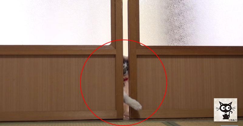 両手を体を器用に使って引き戸を開ける賢い猫ちゃん