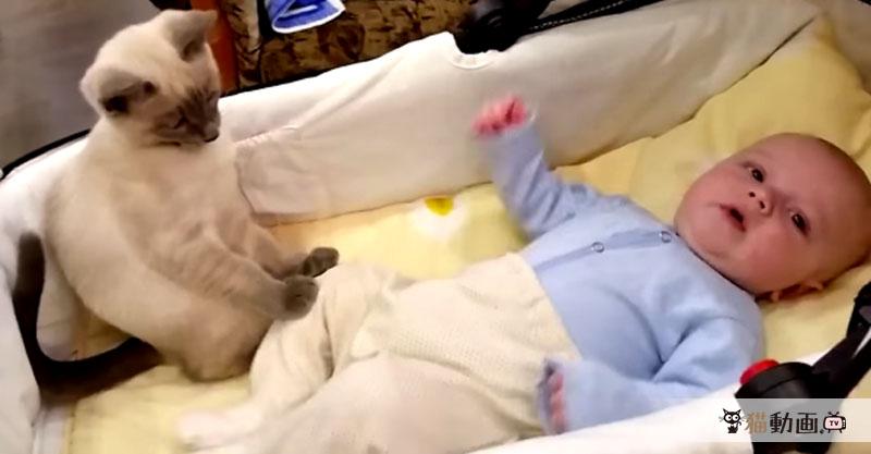 おーちーつーいーてー! 赤ちゃんを落ち着かせようとする猫さん