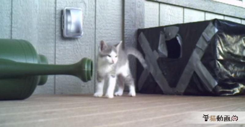 【子猫がたくさん】おはようございます! おはようございます! おはようございます!