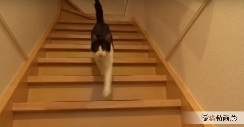 飼い主さんが大好きすぎる猫さんの階段降り&スリスリが羨ましい✨