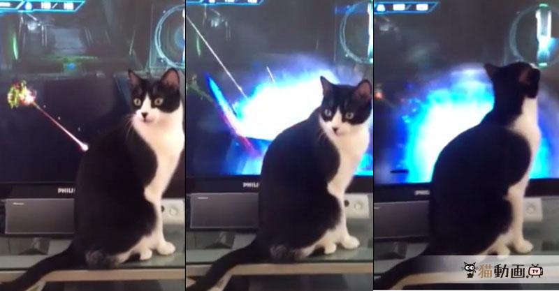 この猫ちゃん……強い……無敵……