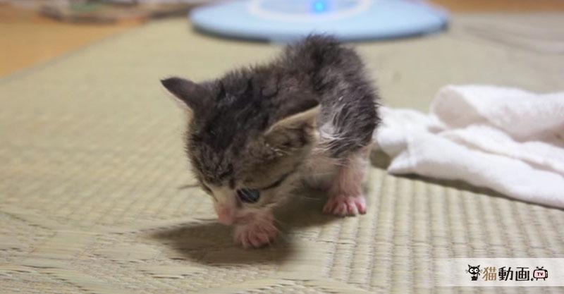 早く乾かそうと体を振ろうとするも上手にできずにぷるぷるする子猫ちゃん✨