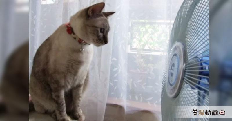 【ワレワレハウチュウジンダ】扇風機で遊ぶ猫さんは目を回すのを楽しんでいます