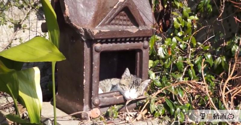 【スクープ】猫は神様だった! その決定的証拠が見つかりました!