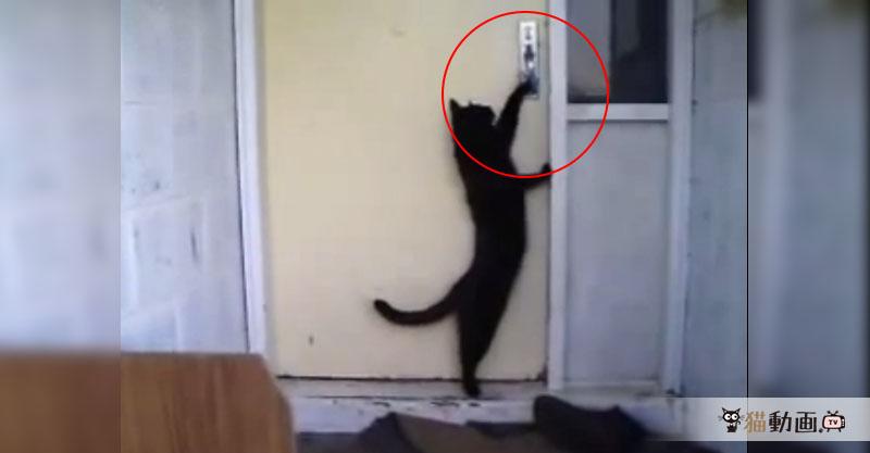 コンコンコン、なんの音? 猫さんが帰ってきた音( ˙꒳˙  ).。oO(お化けだと思ってた)