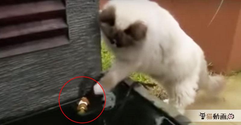 せめて、お名前だけでも教えてください……カクレクマノミの命を救った猫