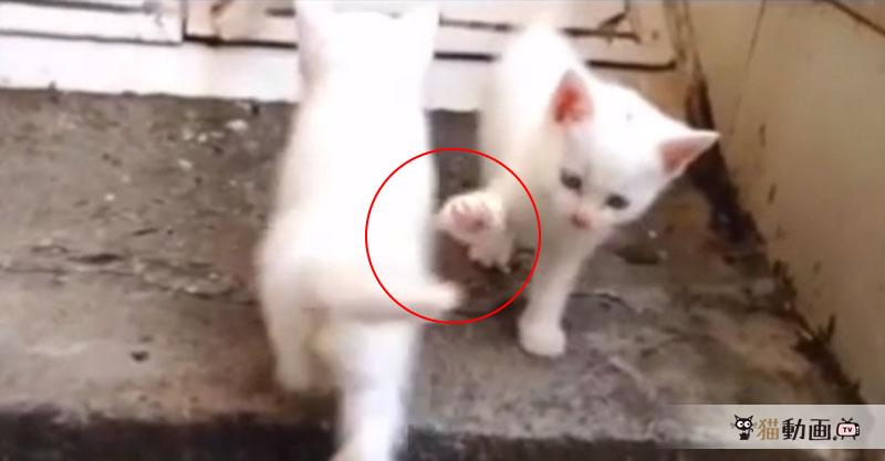 ハイタッチしようとするも、無視されてしまった子猫ちゃんの哀愁が半端ない