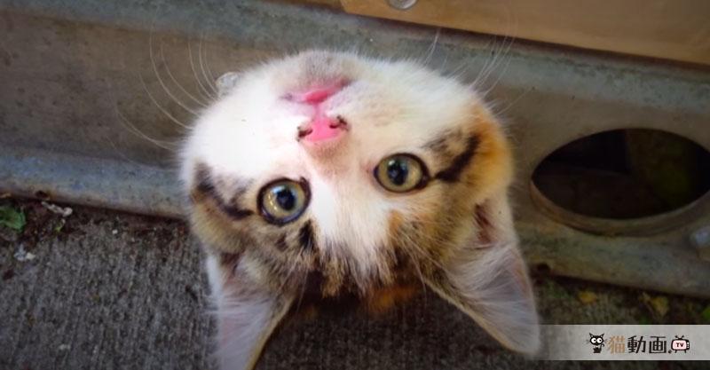 小さな穴にすっぽりハマってしまった子猫ちゃんの救出劇! 結果は……