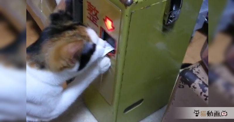 バスに乗る気まんまん猫さんの整理券の受け取りがお見事です!