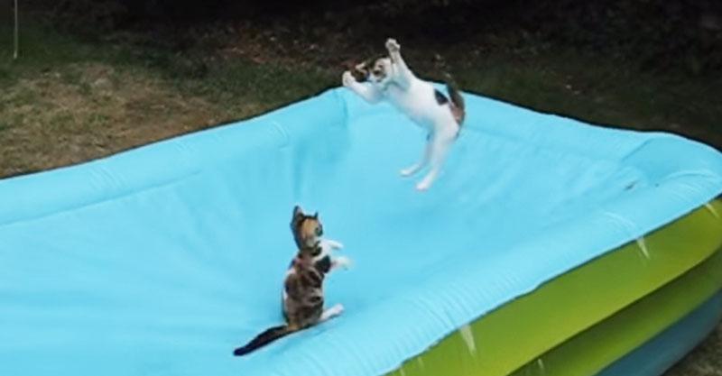プールの底に落ちてゆく猫ちゃん……これはまるで猫地獄!?( ´艸`)