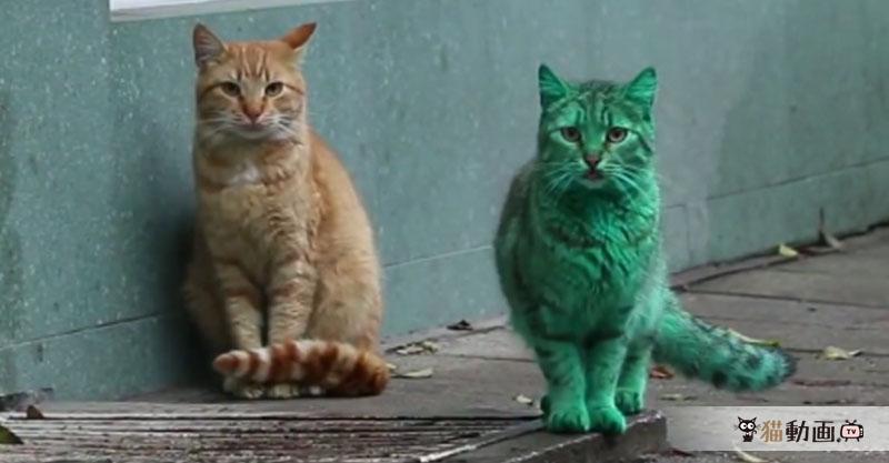 緑色の猫が現れて街中騒然! まるでCGのような猫さんにびっくり💦