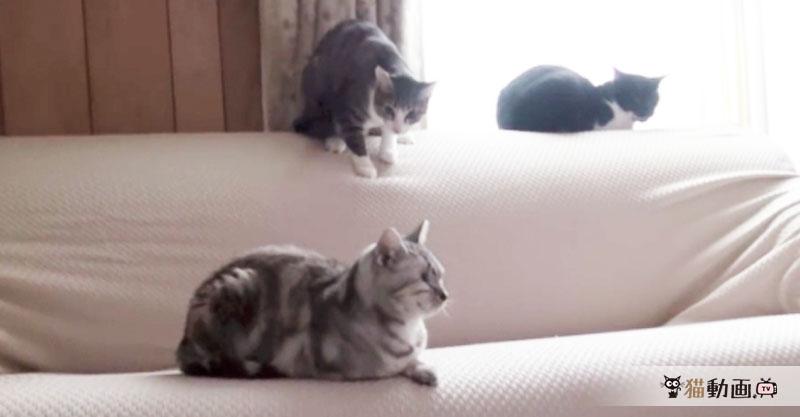まったりとした時間を過ごしていた3匹の猫…しかし事件は起きた!∑(=゚ω゚=;)