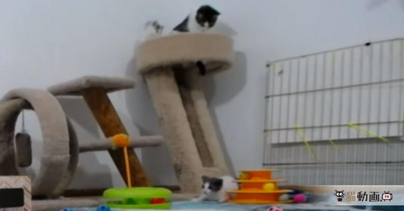 お母さん大好き子猫ちゃんは転げ落ちても、もう一度這い上がります✨