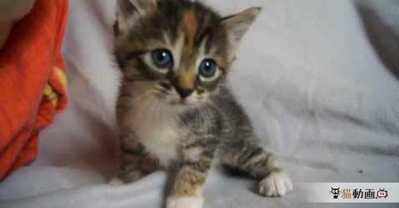 疲れたときは可愛い子猫ちゃん(本当に)が癒してくれます💕