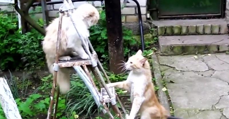 【音量注意】猫さんたちのにらみ合い……からの猫パンチ! かなり激しいです💦
