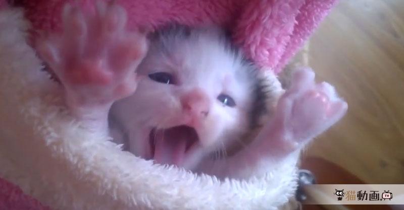 ポケットにすっぽり収まった子猫ちゃんのリラックスした顔が可愛い(*≧∀≦*)