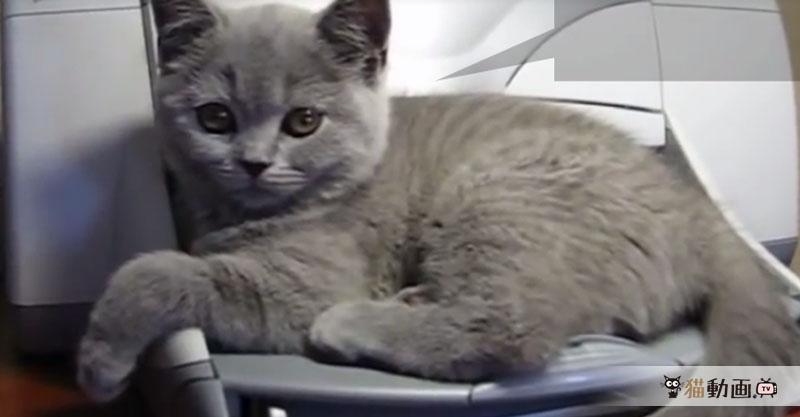 背後に迫った恐怖((( ゚д゚ ;))) あまりにもの驚きに猫さんは……!?