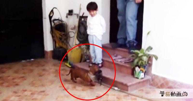 『うちの子がごめんなさいね』と子猫ちゃんを運ぶのは……なんとワンちゃん!?
