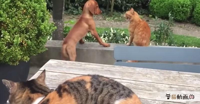 家族の犬さんがパンチされたのを見て敵討ちに向かう猫さんが素敵(≧∀≦)