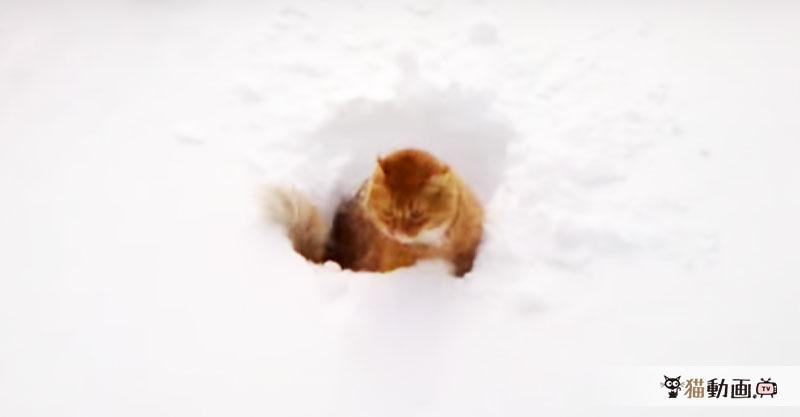 雪に投げ込まれた猫さん、やっぱり暖かいところが好きなようです。