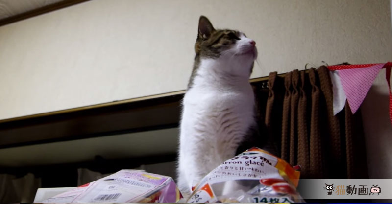 お菓子を食べようとしていたことがバレてシラを切る猫さんの演技がヘタクソすぎます(笑)