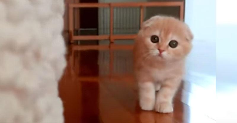 【ダルマさんがころんだ】忍び寄る……可愛い子猫ちゃんにメロメロ💕