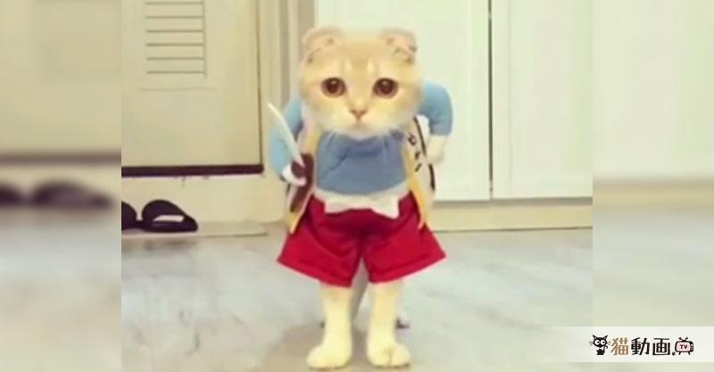 ハッピーハロウィン✨ 吾輩は日本一の猫侍であーる! いざ、参らん!