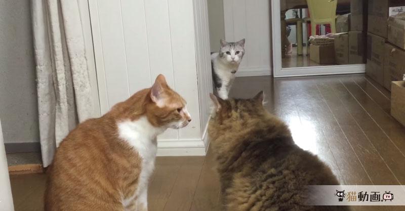 【ちょっと通りますよ】喧嘩中の猫さんたちの間を通ると……とばっちりを受けます( >Д<;)