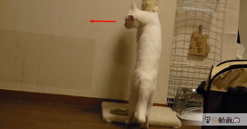 ワンちゃんに飛びかかるも失敗した猫さんのごまかし具合に……デレてしまいます(*´ェ`*)