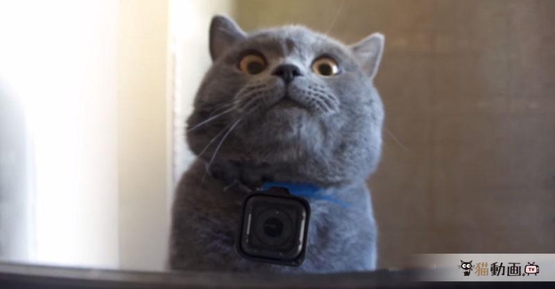 猫ちゃんにGoProをつけてお留守番の様子を覗いたら……そんな妄想が詰まった作品です✨