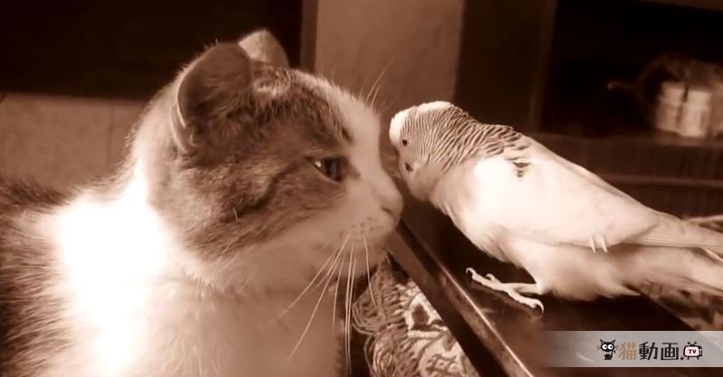 やたらと猫さんにちょっかいをかけるオウムですが、最後は……(>w< )
