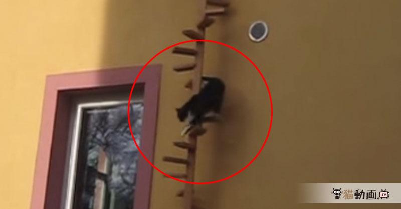 オシャレな猫専用の螺旋階段を降りる姿は……とっても優雅に見えます✨