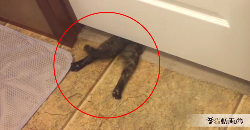 『猫は液体』という噂は本当なのかもしれません……( ´艸`)