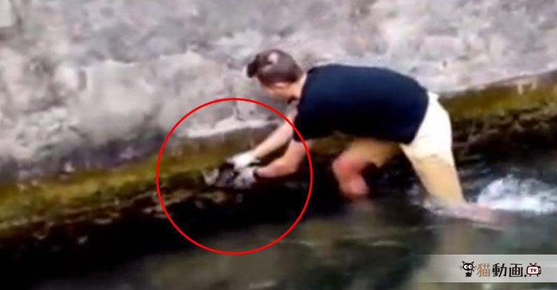 【救出劇】水面ギリギリで助けを呼ぶ子猫ちゃんを救出に向かった男性と笑顔の生還!