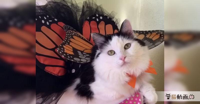 ハッピーハロウィン✨ まるで宝塚?! 豪華なコスチュームを着る猫さん