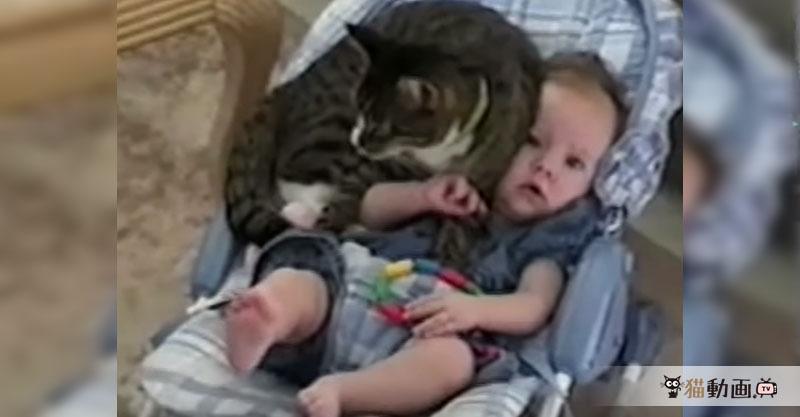 ぴったりくっついて幸せそうな赤ちゃんと猫さんが可愛くてニマニマします(*´ェ`*)