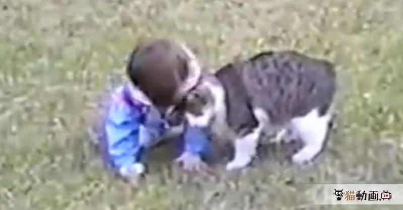 まだよちよち歩いている子供にスリスリする猫さん、バランスをくずした子供は……( ´艸`)