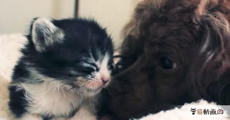 ゴミ箱で発見された子猫ちゃんは、優しいワンちゃんの子供になりました✨